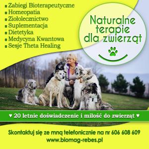Terapie dla zwierząt-naturalny sposob na kleszcze sprawdzony